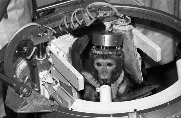 monkey space