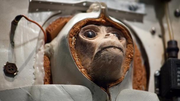 iranian monkey